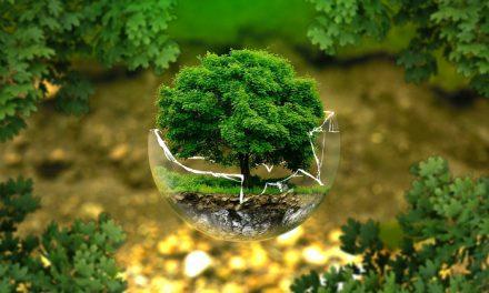 Formation associative – militer pour protéger l'environnement