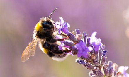 Conférence «Les insectes au jardin» – dimanche 12 mars