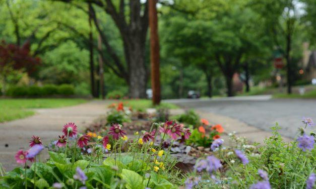 «Jardiner ma rue» à Rennes