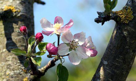 Arbustes & fruits comestibles : samedi 13 mai