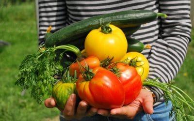 Les bons gestes : comment éplucher et couper vos fruits et légumes ?