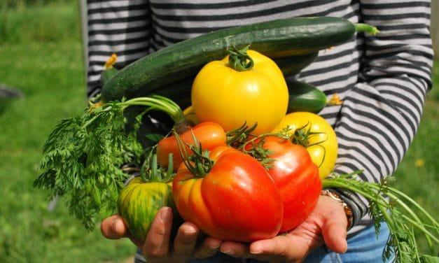 Quel est le rôle de la consommation et de la production de la bio pour sauver le climat ?