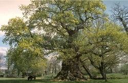 Les arbres remarquables en Ille-et-Vilaine (2000)