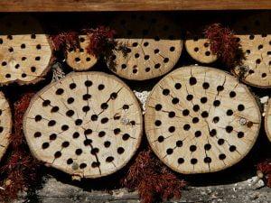 nichoir-insectes
