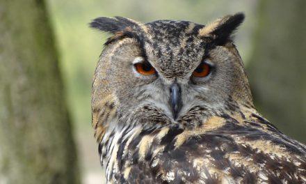 Rencontres d'Ornithologie Bretonne – Saint-Lunaire : samedi 2 et dimanche 3 décembre