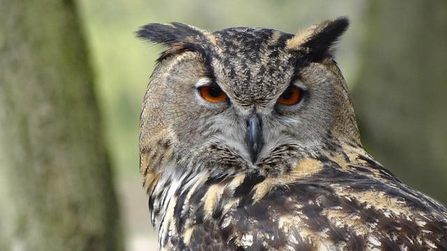 Réunion « ornithologie 35 » de Bretagne Vivante – Mercredi 8 mars
