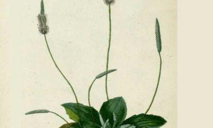 A la découverte des plantes sauvages avec Vert le jardin : mercredi 10 mai