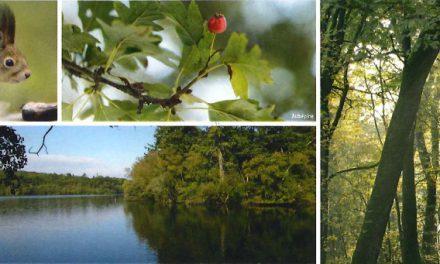 La forêt de Corbière fête la nature