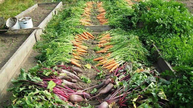 Pour une contribution des jardins partagés au système alimentaire territorialisé rennais- mardi 17 octobre