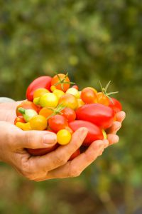 legume_tomates