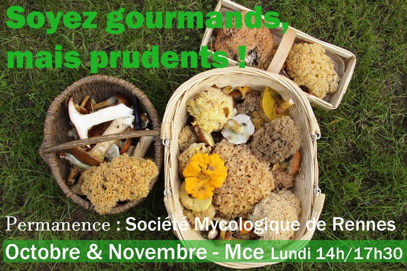 Champignons : profitez des animations de la Société Mycologique de Rennes en Novembre