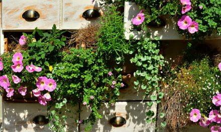 « Je jardine et fleuris mon balcon » – Formation