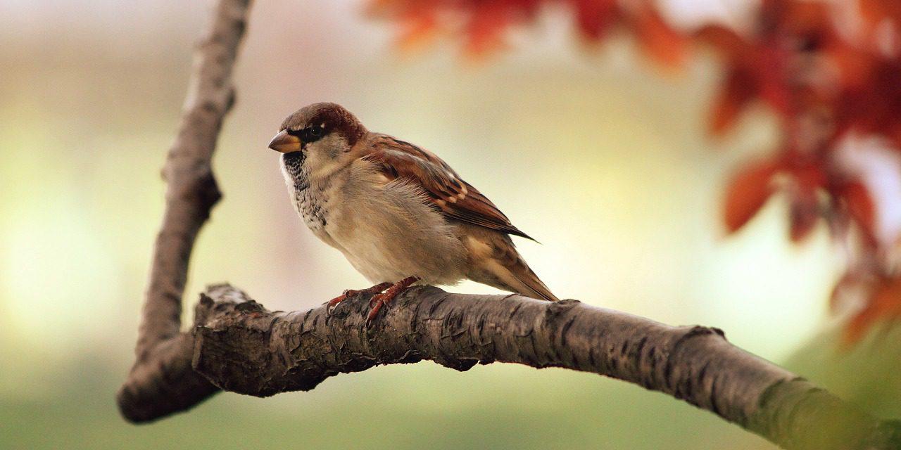 Oiseaux des jardins : faites le compte !