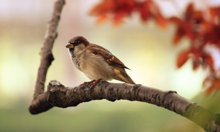 Oiseaux de nos jardins : participez au comptage ! 27 et 28 janvier