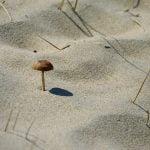 champignon_sable