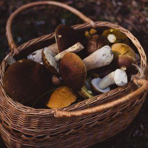champignons_panier2