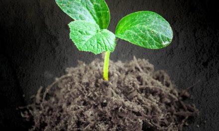 L'agriculture bio plus efficace pour lutter contre les maladies des cultures !