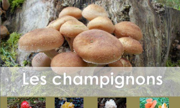 Sélection d'ouvrages sur les champignons (2018)