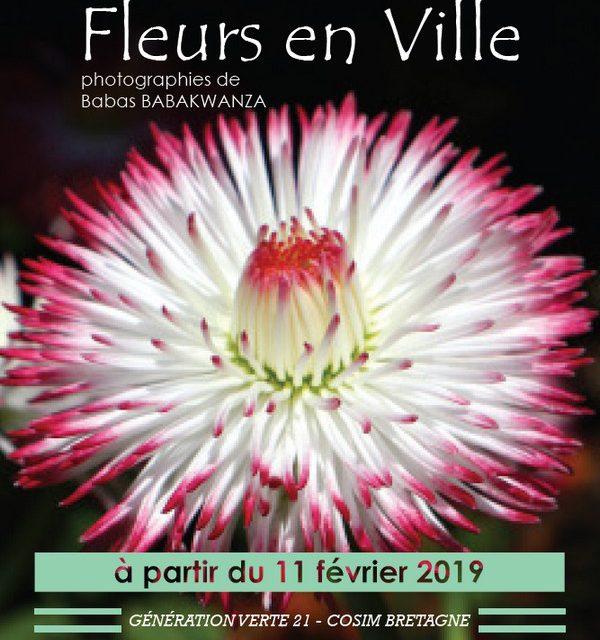 Fleurs en ville – exposition de photographies