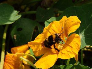 potager biodiversité