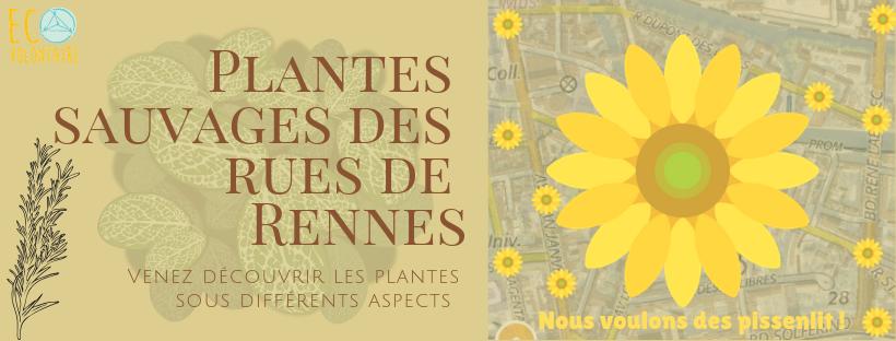 ERB_Plantes sauvages des rues de Rennes 2019