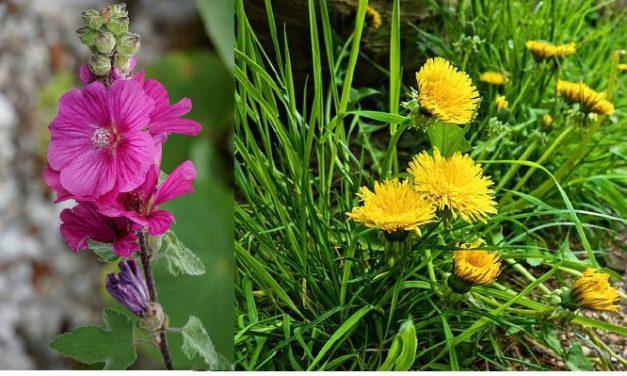 Sélection d'ouvrages sur les fleurs et la nature en ville (2019)