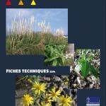 """Fiches techniques """"Quelques plantes invasives du bassin versant de l'Elorn"""""""