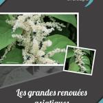 Plaquettes d'information sur les plantes exotiques envahissantes