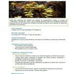 5 fiches activités sur la biodiversité à l'école