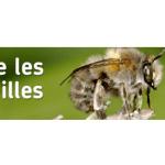 Vive les abeilles