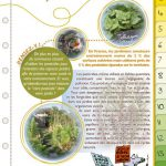 Zéro pesticide dans nos jardins