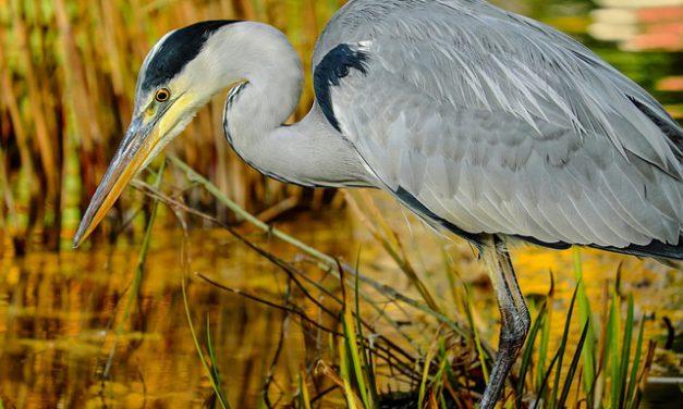 Bretagne vivante : rendez-vous avec les oiseaux migrateurs de Bretagne