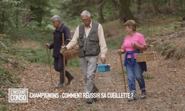 Instant Conso – Champignons : comment réussir sa cueillette ? (2018)