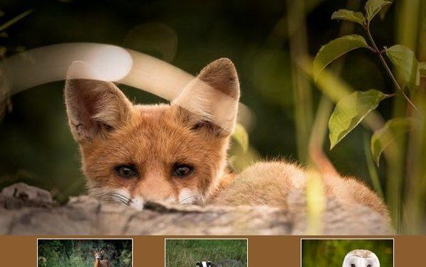 Sélection d'ouvrages sur la faune sauvage bretonne (2020)