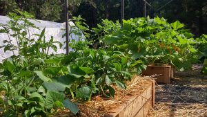 jardin-potager-bac