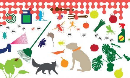 Pesticides : attention à leur utilisation à la maison !