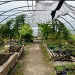 pole ressources alimentation herbes folles plantes alimentation