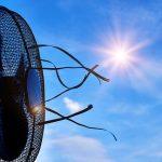 Canicule : comment rester au frais cet été ?