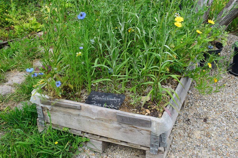 pole ressources alimentation herbes folles cuisiner les plantes