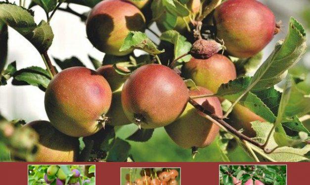 Sélection d'ouvrages sur les arbres fruitiers (2020)