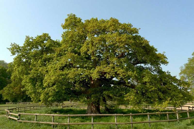 arbres remarquables bretagne