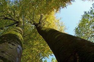 arbres_remarquables_bretagne_arbres_2