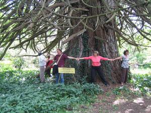arbres_remarquables_bretagne_arbre5