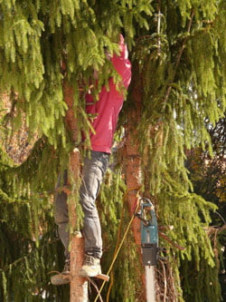 arbres_remarquables_bretagne_mitoyenneté