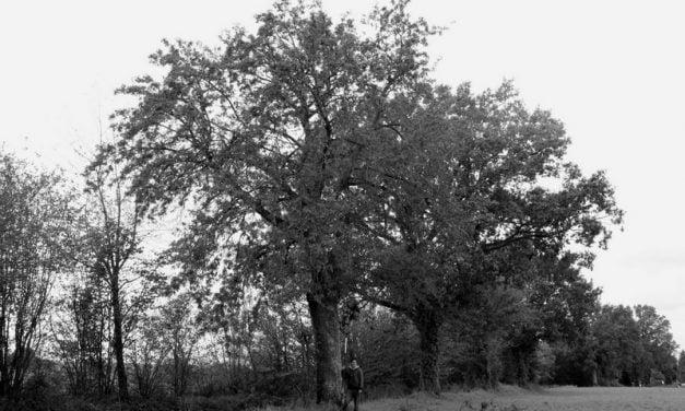 L'arbre, un être vivant à part: rencontre avec Arnaud Fourrier, pépiniériste