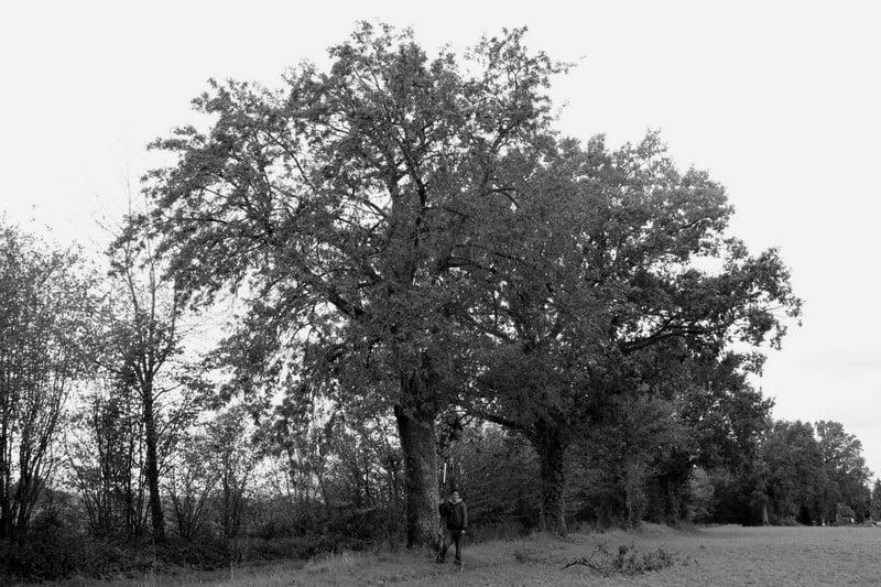 arbre-cormier-arnaud-fourrier