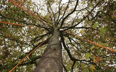 L'arbre émancipateur : rencontre avec l'association Là-Haut