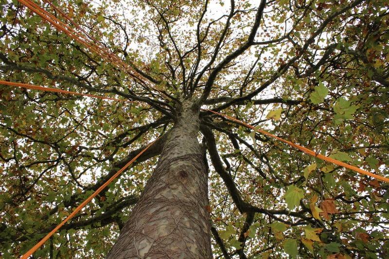 arbre emancipateur