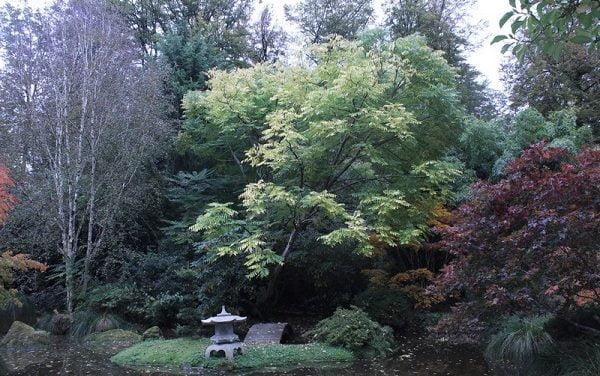 L'arbre comme invitation au voyage : rencontre avec Alain Jouno