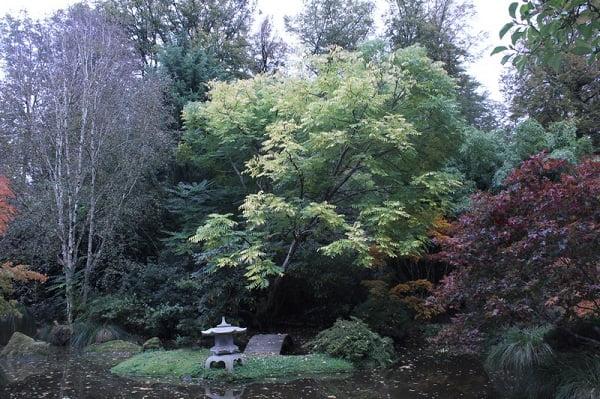 Arbres_Parc-Botanique-Haute-Bretagne